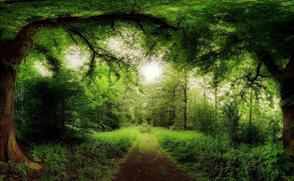 100 Beautiful & Amazing Nature HD Wallpapers.