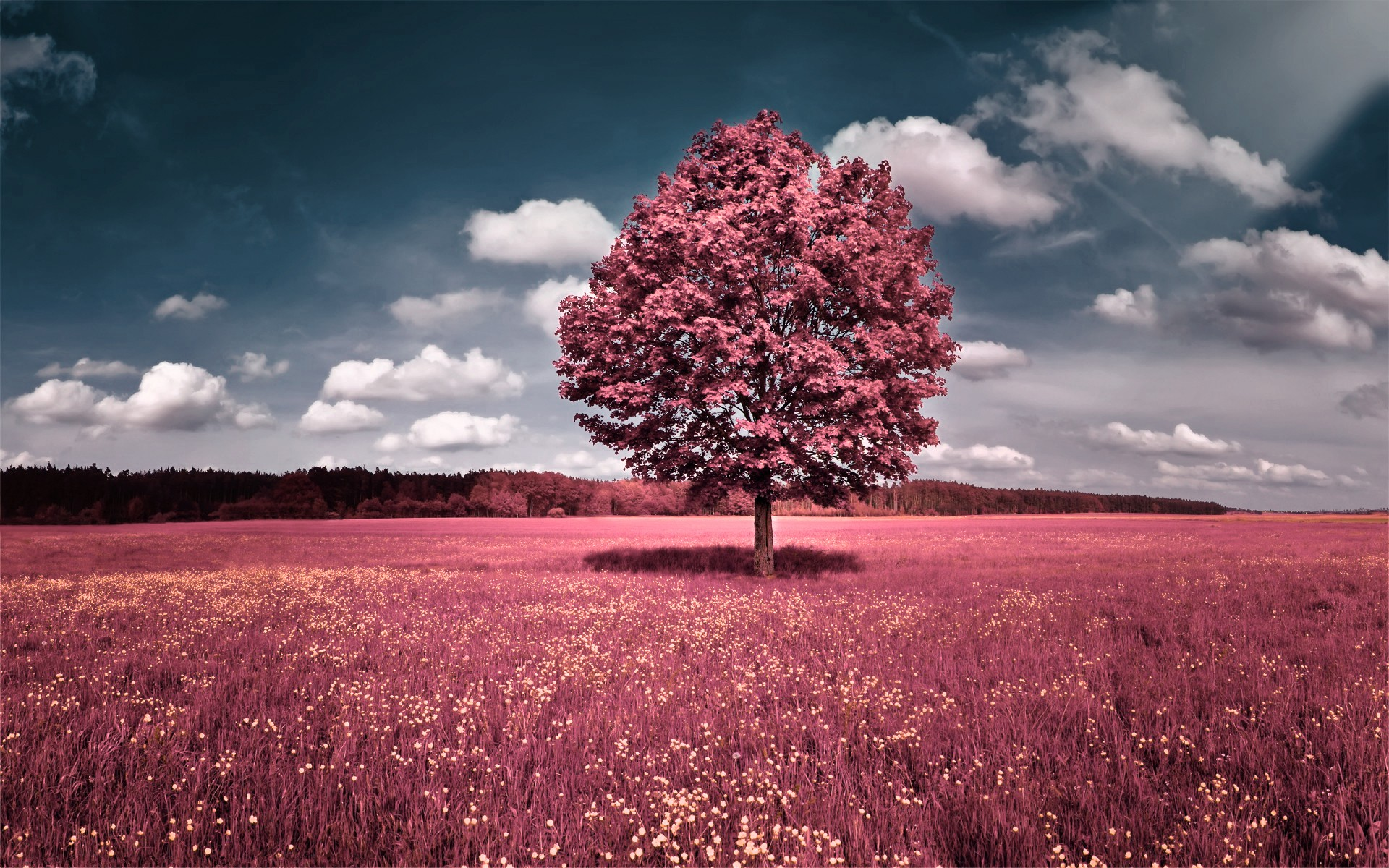 Pink Fantasy Nature Wallpaper.
