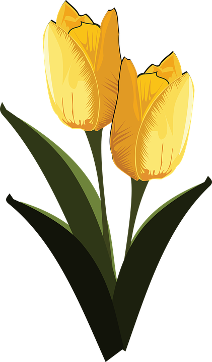 Free vector graphic: Clip Art, Flor, Flora, Flower.