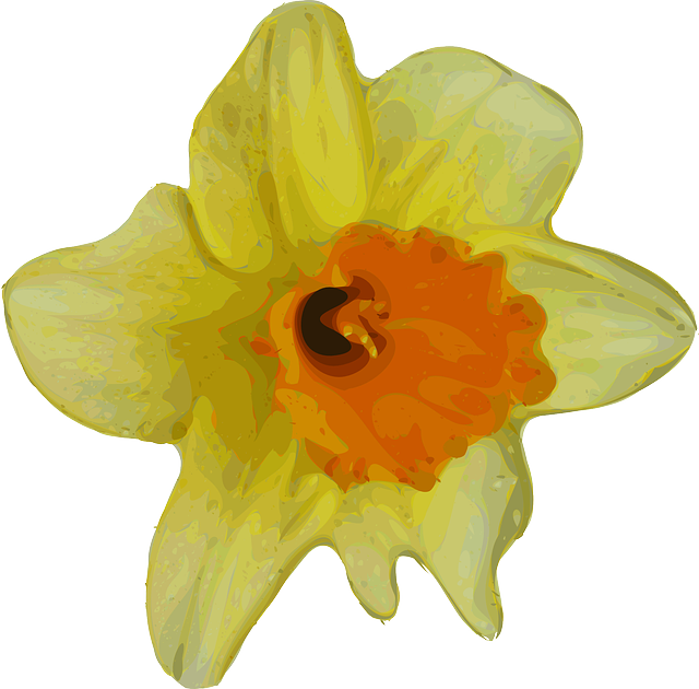 DAFFODIL, NARCISSUS, FLOWER, PLANT, NATURE, YELLOW.