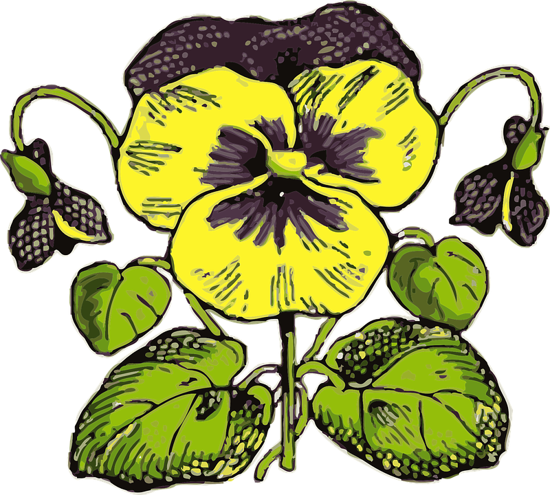 Free vector graphic: Pansy, Flower, Plant, Garden.
