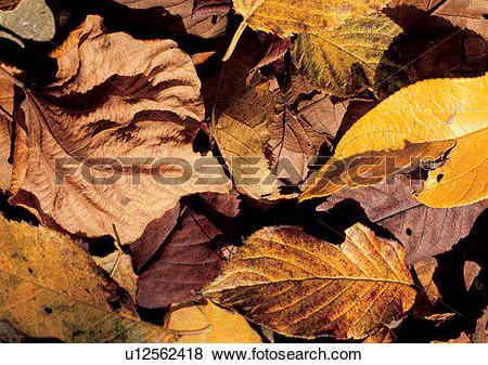 Pictures of leaf, background, brown, nature, yellow u12562418.