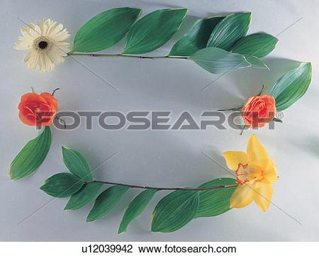 Stock Photo of plant, white, rose, flower, background, nature.