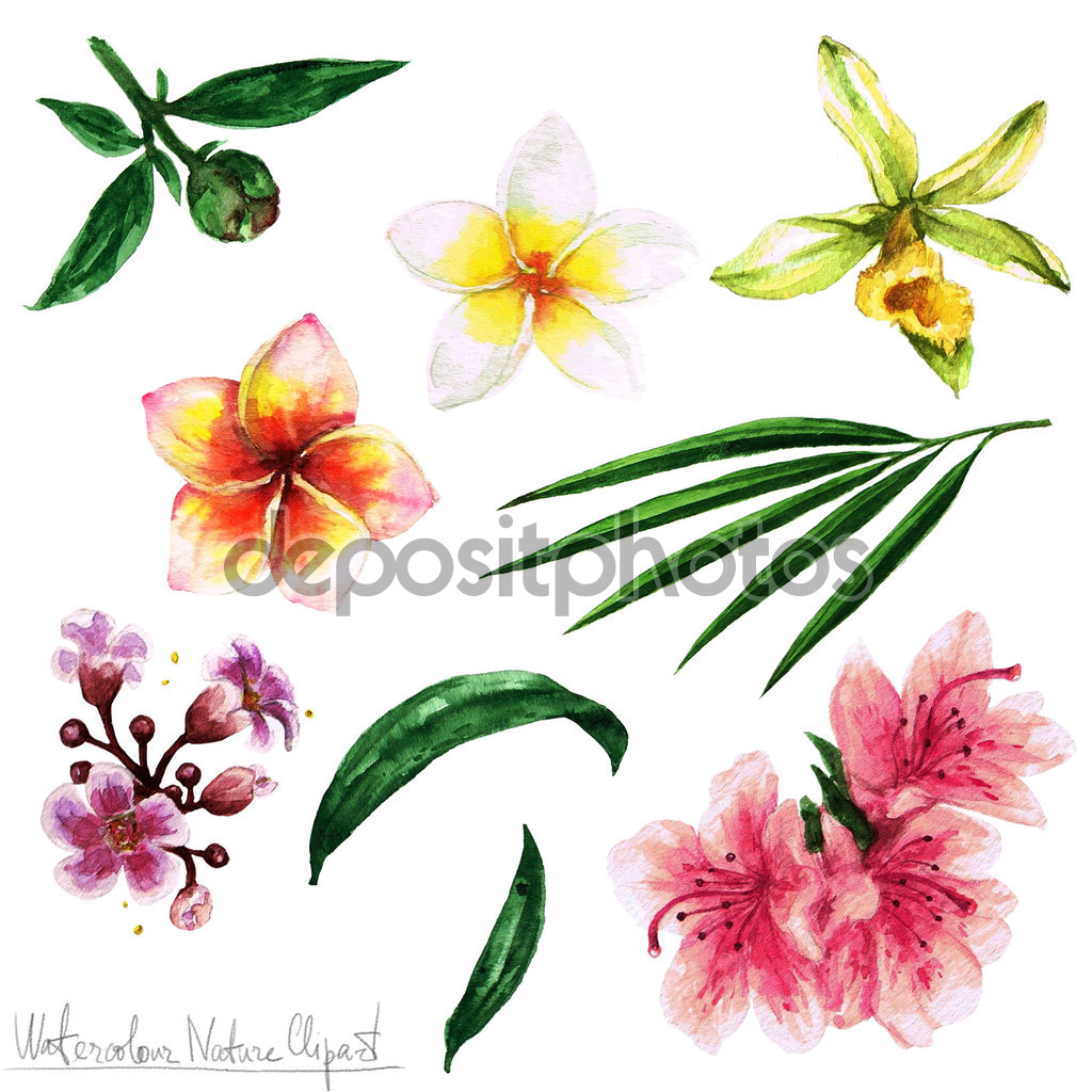 Aquarela natureza Clipart.