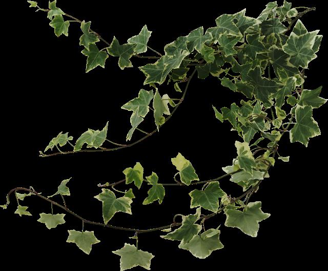 Bem Fácil PNG : Natureza verde png.