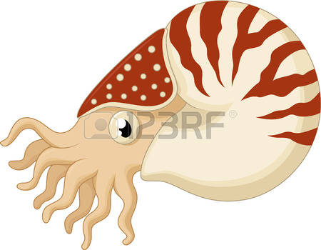 3,477 Nautilus Stock Illustrations, Cliparts And Royalty Free.