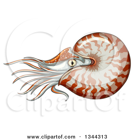 Clipart of a Swimming Nautilus.