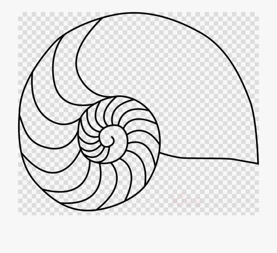 Nautilus Shell Clip Art Clipart Nautilidae Chambered.