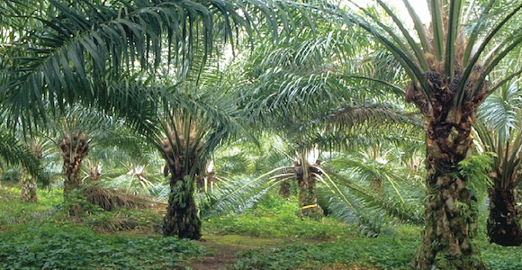 New Britain Palm Oil looking to expand and diversify, says.