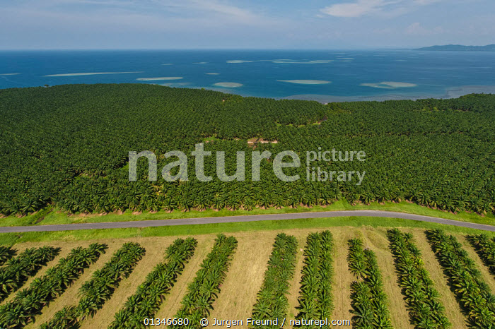 Nature Picture Library.
