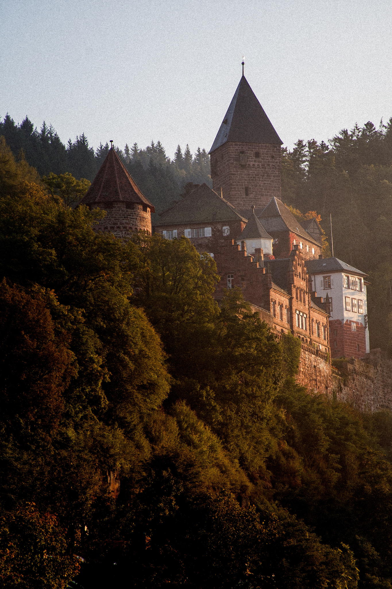 The beautiful Zwingenberg Castle in the Neckar Valley, near.