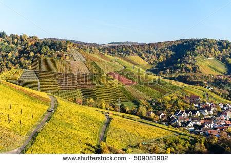 German Vineyard Banco de imágenes. Fotos y vectores libres de.