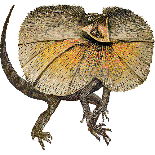 Frilled Neck Lizard Clipart.