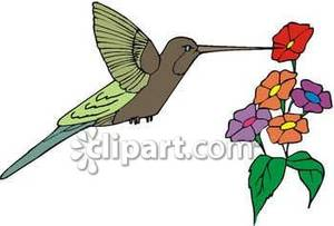 Hummingbird Drinking Nectar From Some Flowers Royalty Free Clipart.