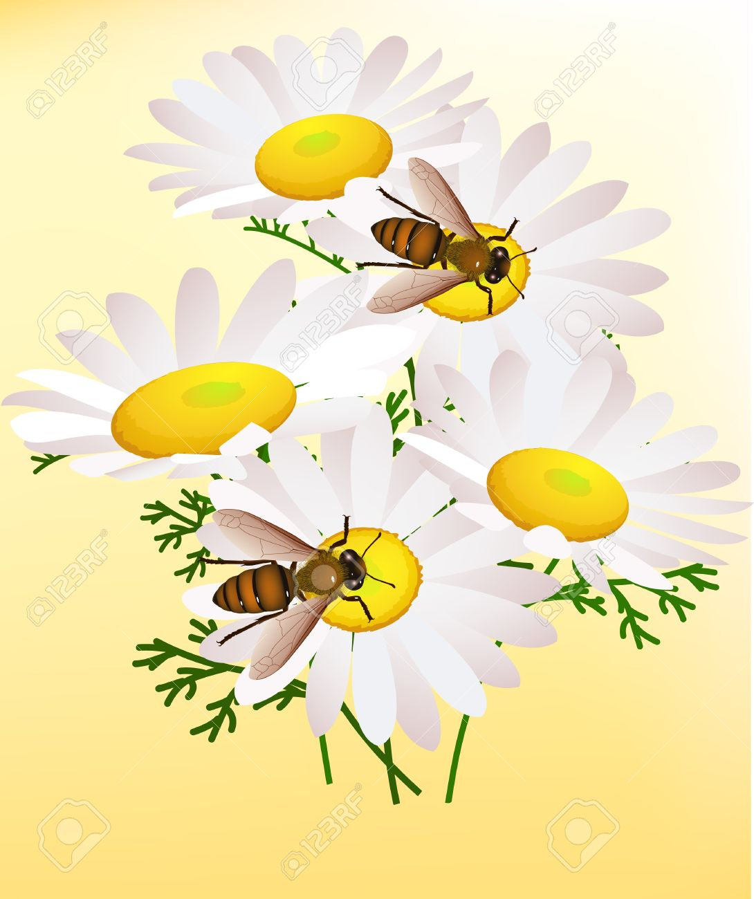Background, Bee, Busy, Buzz, Colorful, Composition, Concept.