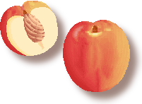 Nectarine Clip Art.
