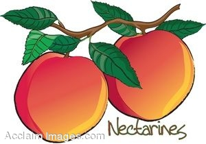 Clip Art of Nectarines on a Branch.