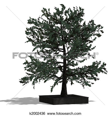 Stock Illustration of 3D Render of a needle beam Tree k2002436.