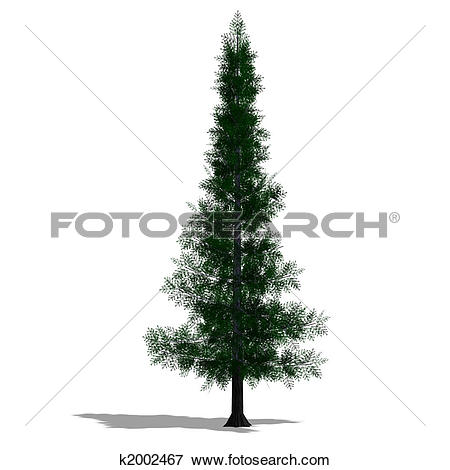 Stock Illustration of 3D Render of a needle beam Tree k2002467.