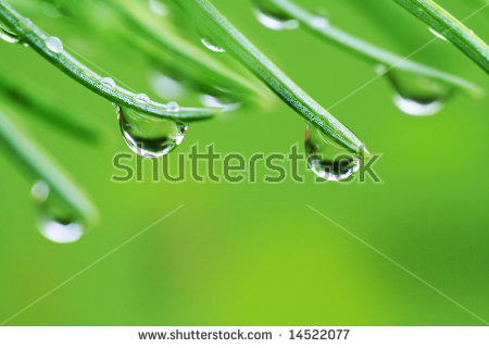 """pine_needles_background"" Stock Photos, Royalty."