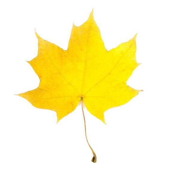 Fall Leaf #2 Clip Art.