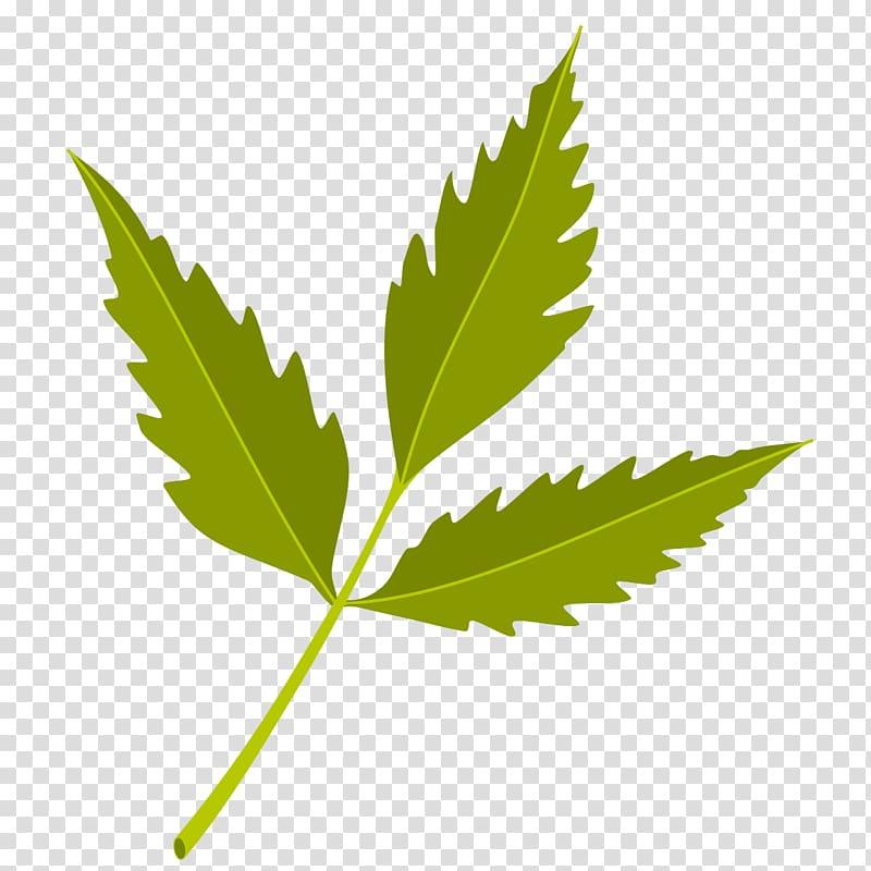 Green leaf illustration, Neem Tree Neem oil Azadirachtin.