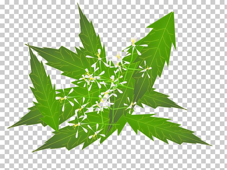 Neem Tree Neem oil Herb Ayurveda , Herbs PNG clipart.