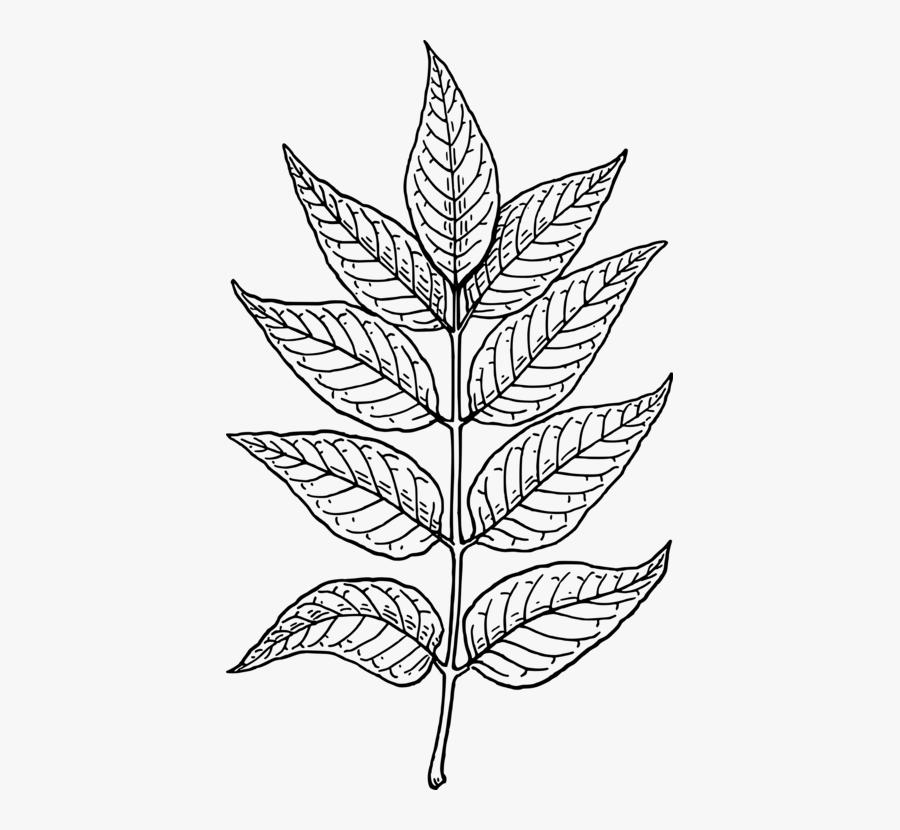 Line Art,plant,flora.