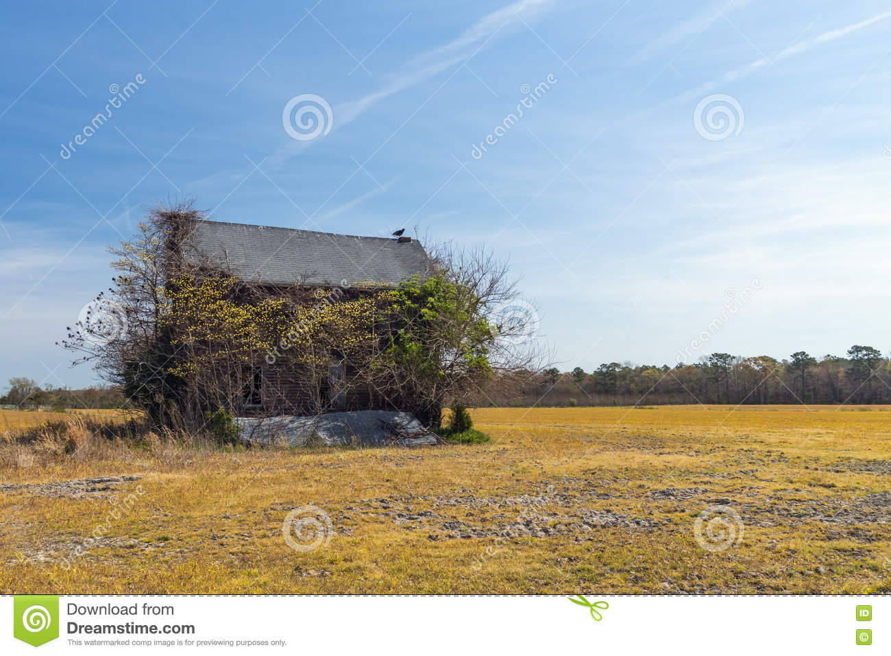 Vulture Stands Watch Atop Neglected Abandoned House Stock Photo.