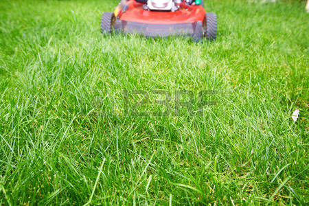Grass Green Grassland Lawn Mead Stock Photos Images. Royalty Free.