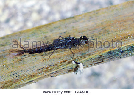 Animals Insects Stock Photos & Animals Insects Stock Images.
