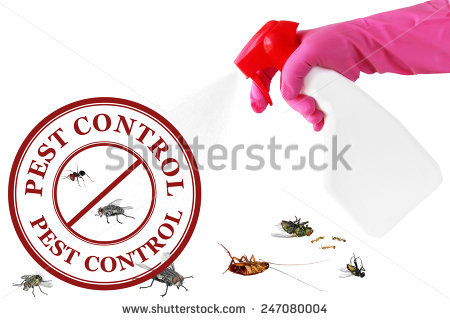 Insect images sex free free stock photos download (1,049 Free.