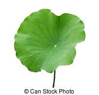 Lotus leaf clipart.