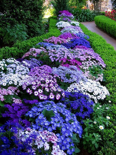 such beautiful hues of violet and blue violet! Border Plants.