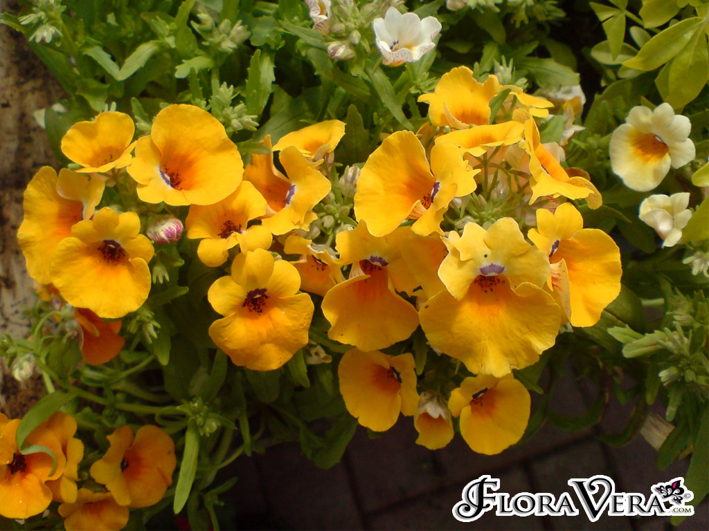 1000+ images about ANNUALS on Pinterest.