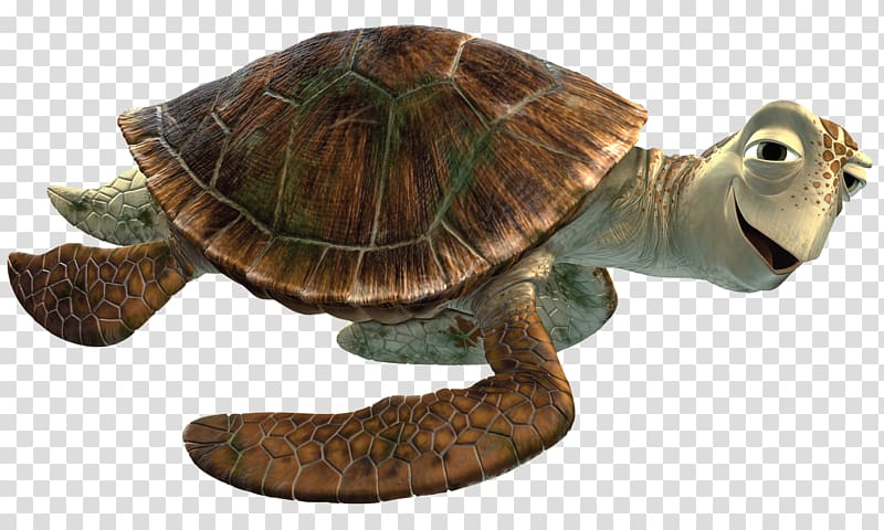 Turtle cartoon character illustration, Crush Close Up.
