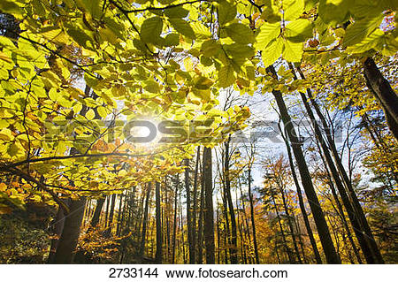 Stock Photo of Low angle view of trees in forest, Aigen, Salzburg.