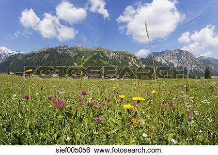 Stock Images of Austria, Vorarlberg, Raetikon, Nenzing, alp.