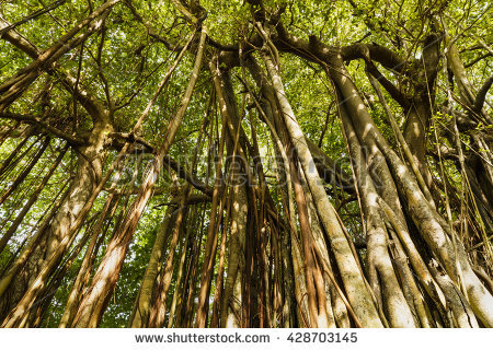 Free stock photos of neotropical liana · Pexels.