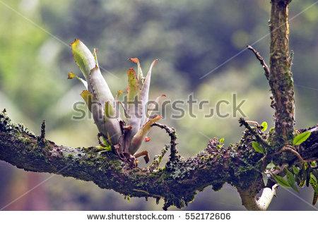 Neotropical Plants Stock Photos, Royalty.