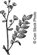 Neotropics Clipart Vector Graphics. 6 Neotropics EPS clip art.