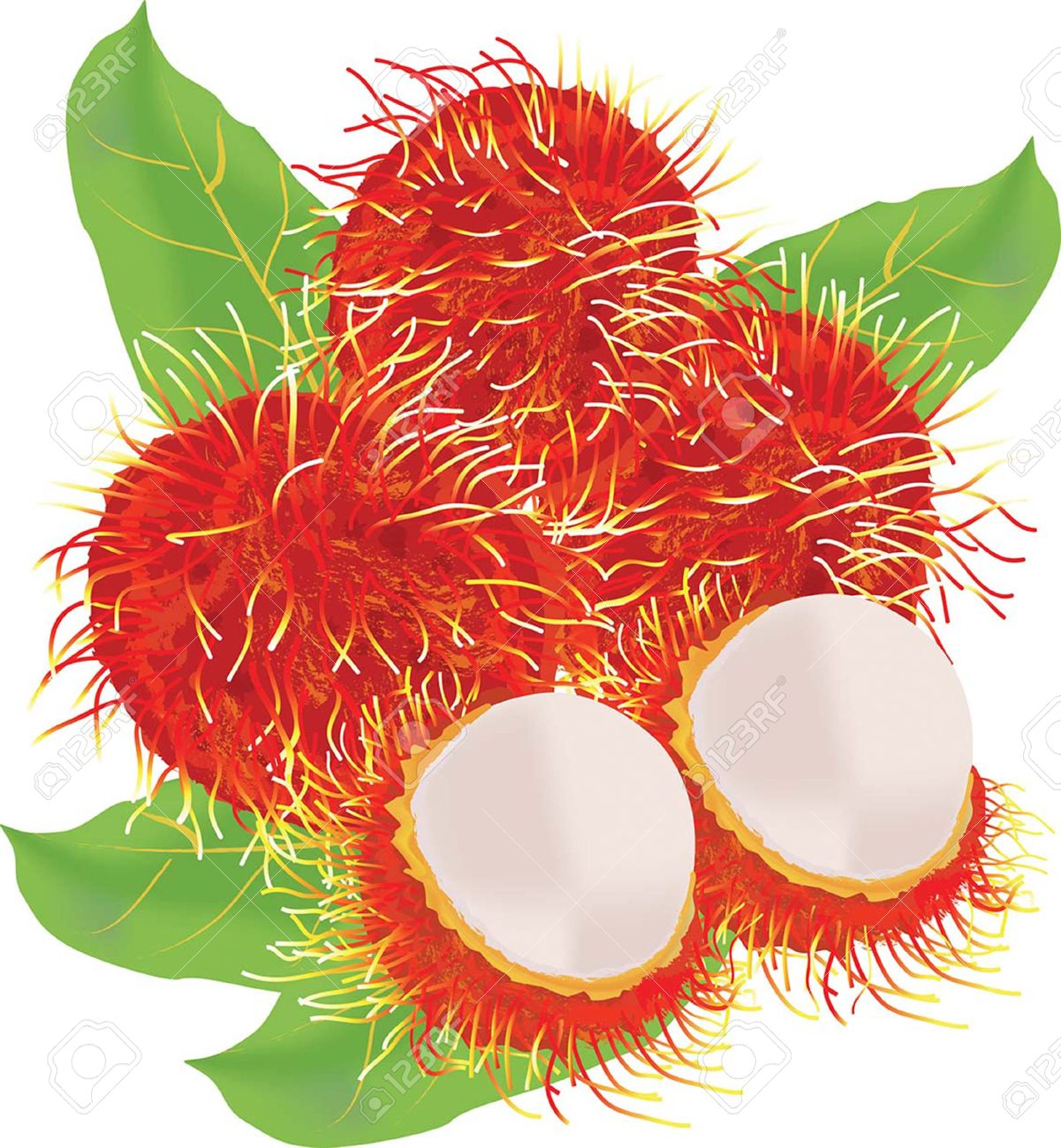 Rambutan Fruit Vector Royalty Free Cliparts, Vectors, And Stock.