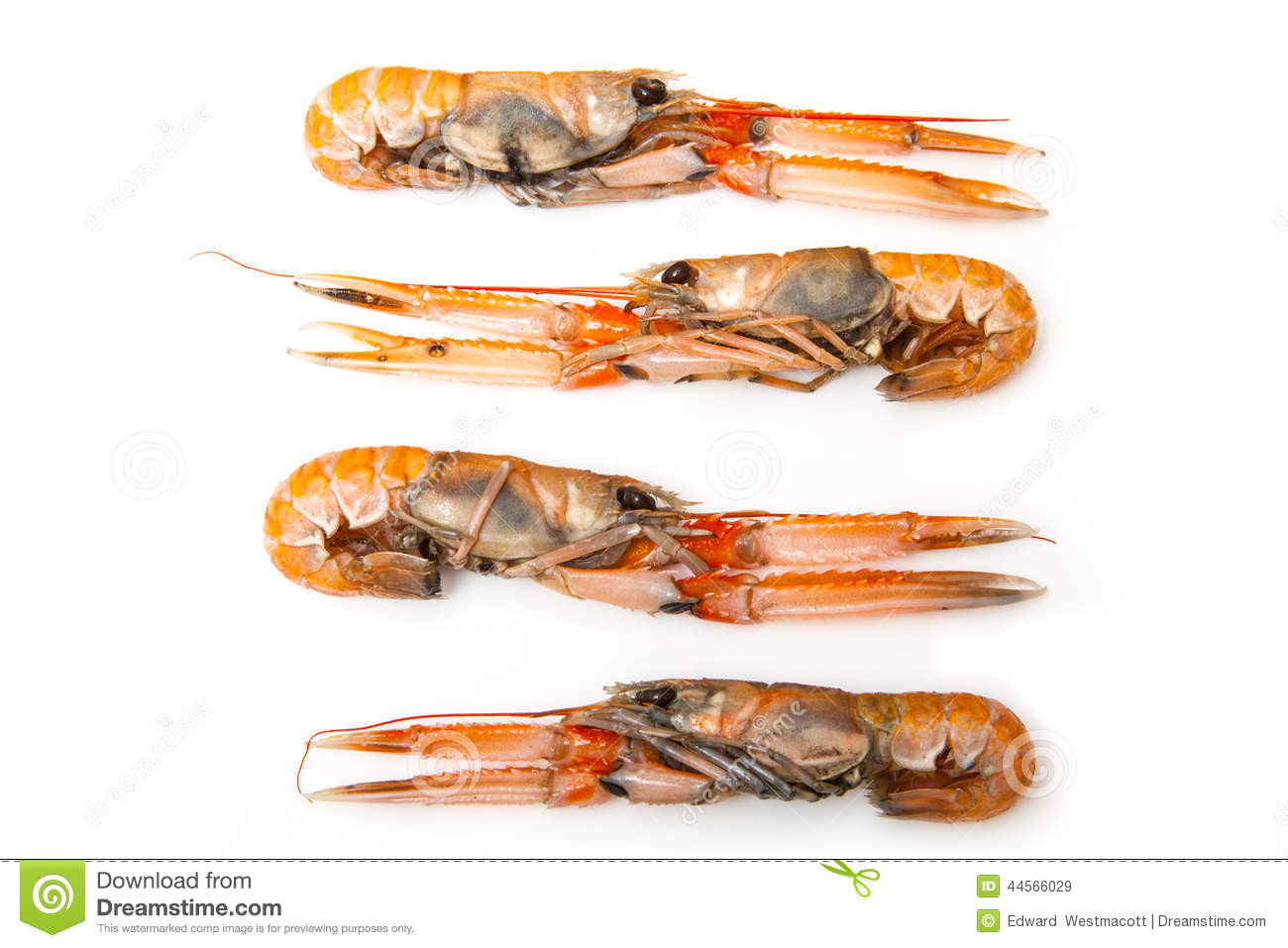 Nephrops Stock Photos, Images, & Pictures.