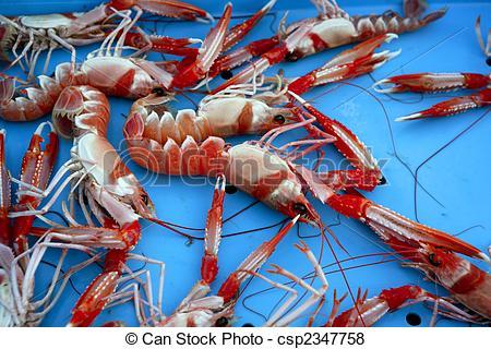 Pictures of Mediterranean crustacean, Nephrops Norvegicus in red.