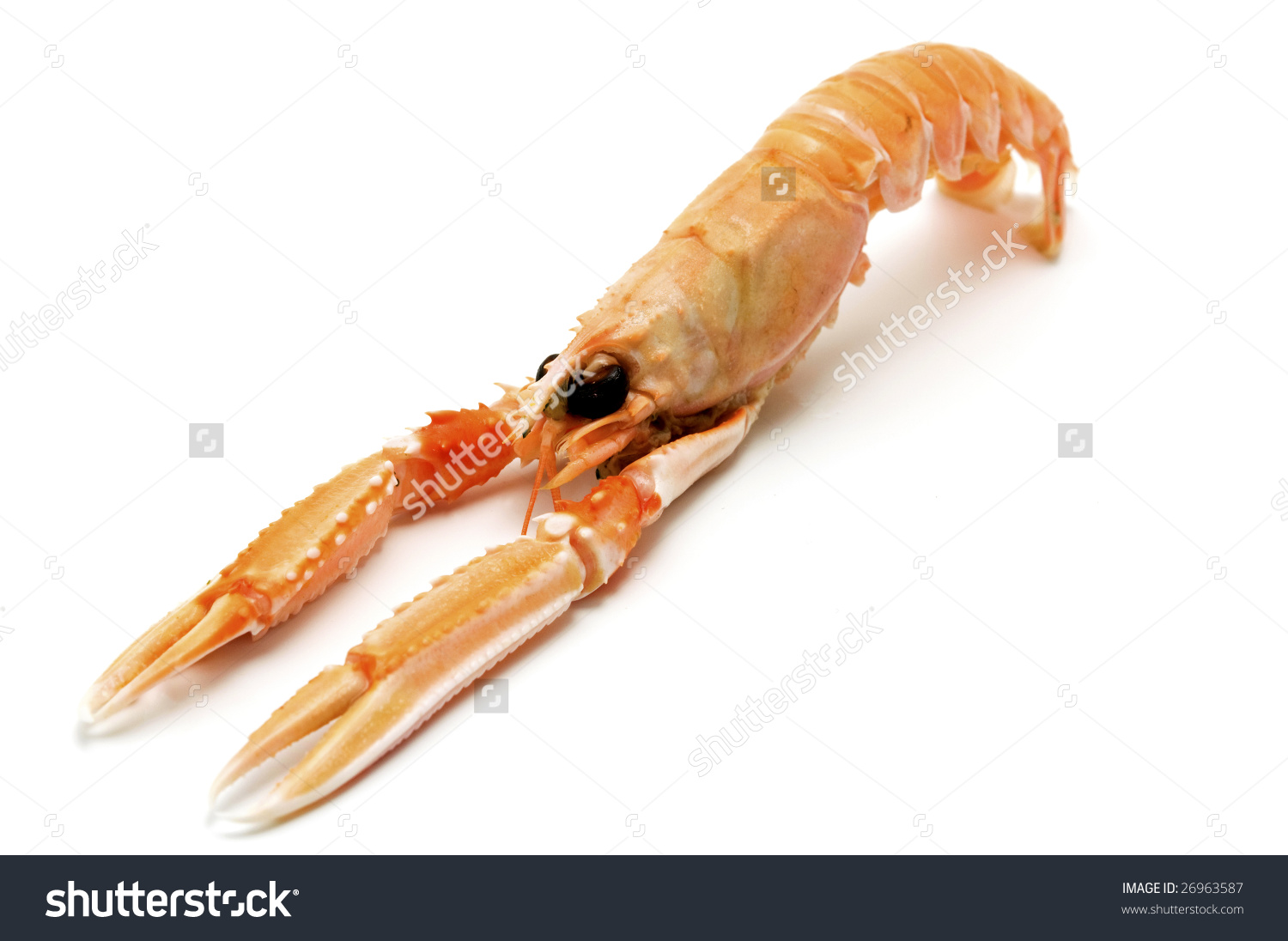 Norway Lobster (Nephrops Norvegicus) On A White Background Stock.