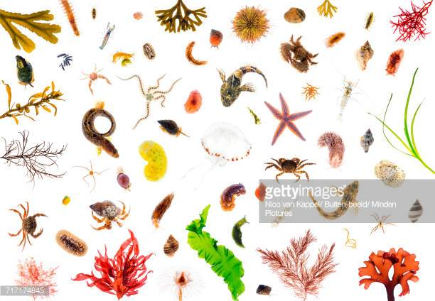 Clam Worm Stock Photos and Pictures.