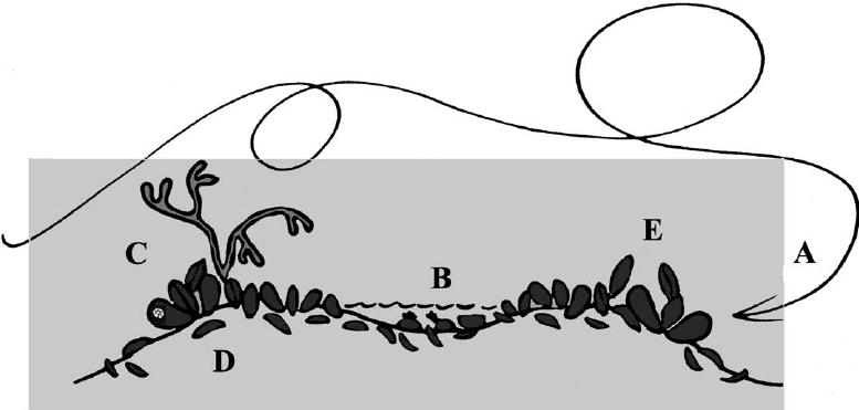 Sediment mediated species interactions in coastal waters (PDF.