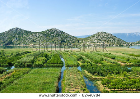 Agricultural Area Neretva River Delta Croatia Stock Photo 81702472.