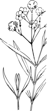 Nerium oleander free vector download (6 Free vector) for.