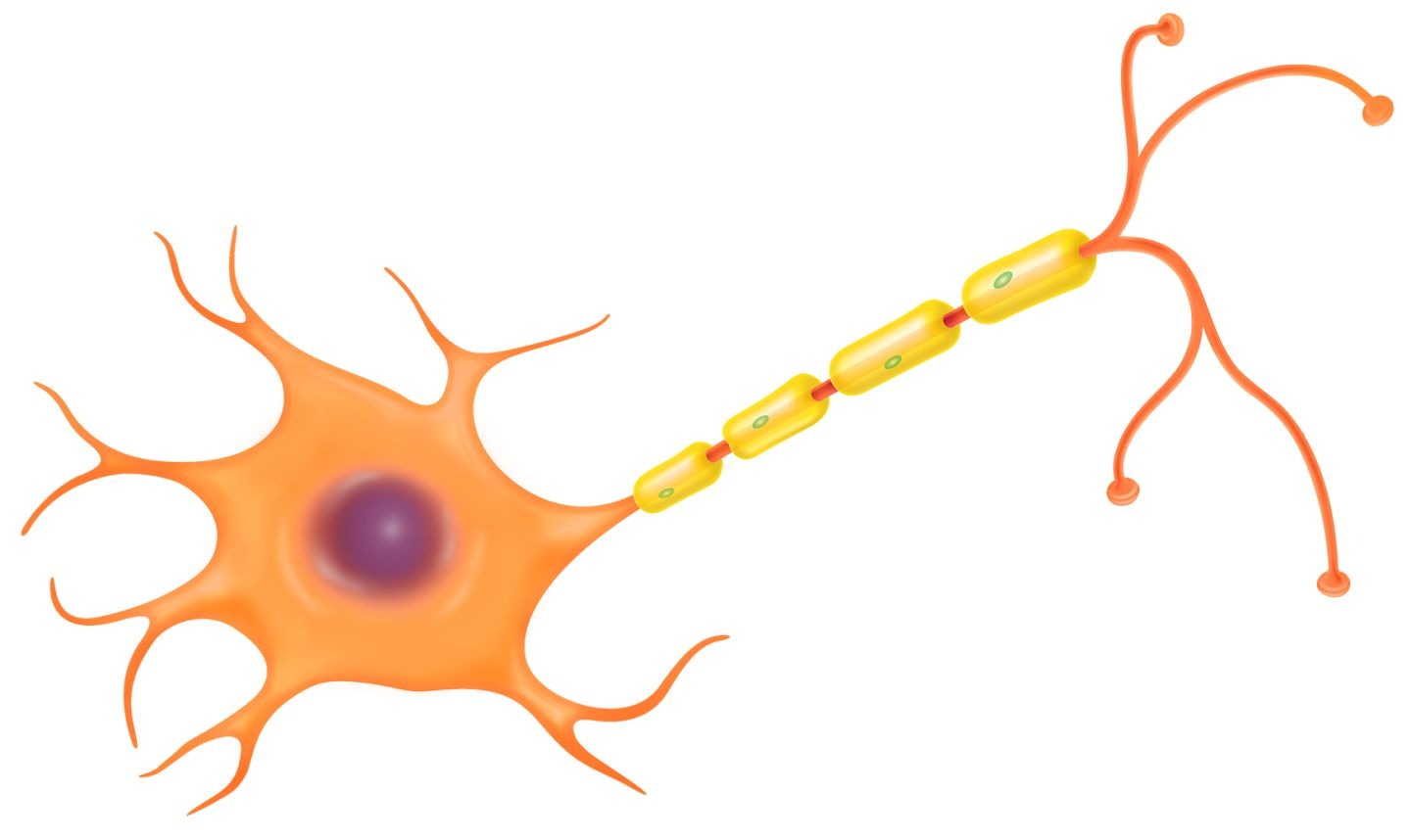 Nerve cell clipart.